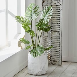Dekopflanze Monstera grün